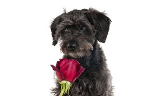 mothersdaydog
